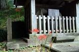 彼岸花09-09-21御前山支所付近寿命寺