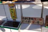 な那珂湊(7)ヤマサ水産生スルメイカ