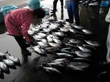 久慈漁港061020メカジキ