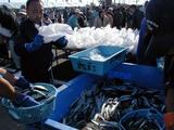 日立お魚センター秋の味覚祭りさんま