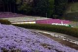 笠間つつじまつり08-04-26(3)芝桜