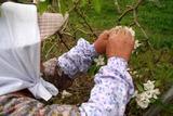 伊達市「箱崎愛宕神社例大祭12-04-30リンゴ畑桃の花