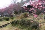 美和村07-02-18紅梅