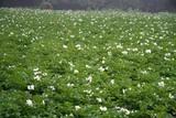 青山花しょうぶ園10-06-15三分咲