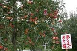 奥久慈リンゴ061014