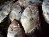久慈漁港070425