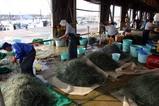 那珂湊漁港08-07-12(4)ヒラメ