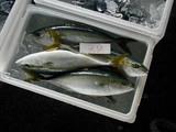 久慈漁港061130