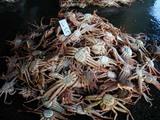 久慈漁港070122