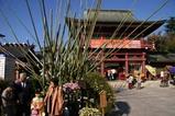 笠間菊祭り