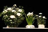 大根むき花