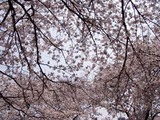 さ桜前原児童公園