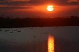 古徳沼の白鳥07-03-21