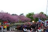 八重桜まつり08-04-27よさこい