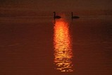 白鳥古徳沼08-03-08a