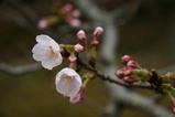 桜西山公園