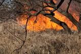 菅生沼の野焼き点火