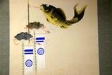 鯨が丘端午の節句09-05-04(3)カメブ呉服店