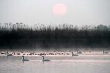 白鳥古徳沼10-03-20