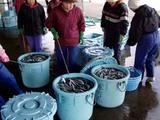 久慈漁港070126