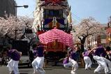 日立さくらまつりひたち舞祭り(3)shescool