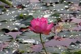花蓮親沢の池