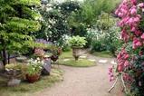花バラ09-05-30