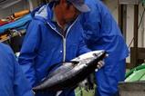 那珂湊漁港08-07-12 (10)マグロ