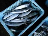 久慈漁港070131