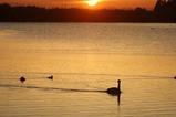 白鳥古徳沼10-03-22