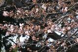 桜神峰公園