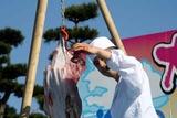 大洗あんこう祭10-11-21あんこう吊し切り(6)心臓