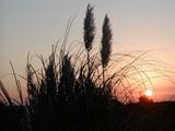 里川夕陽061014