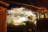 桜10-04-13大橋
