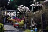 御岩神社回向祭シャクナゲ