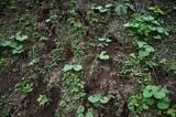 常陸秋そば猪の足跡061022