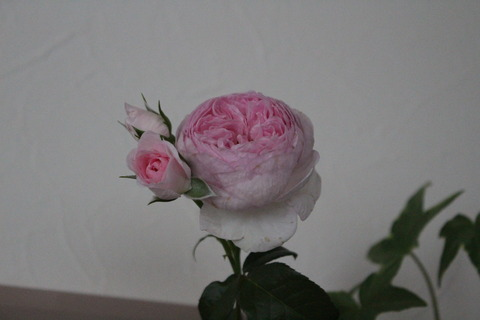 IMG_3512