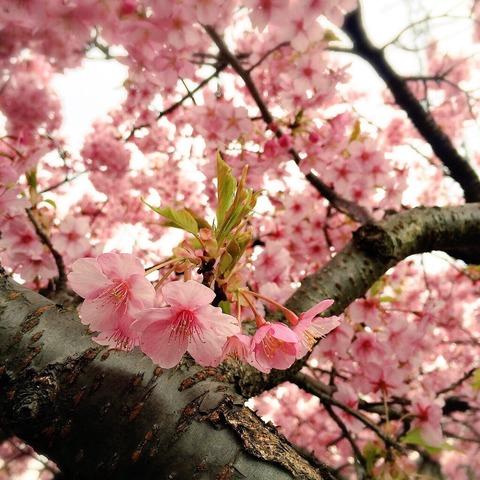 春だ〜(≧∀≦)ノ
