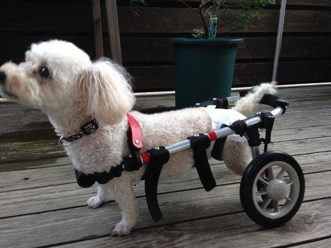 1モコ車椅子