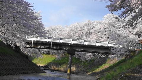 吉野瀬川14
