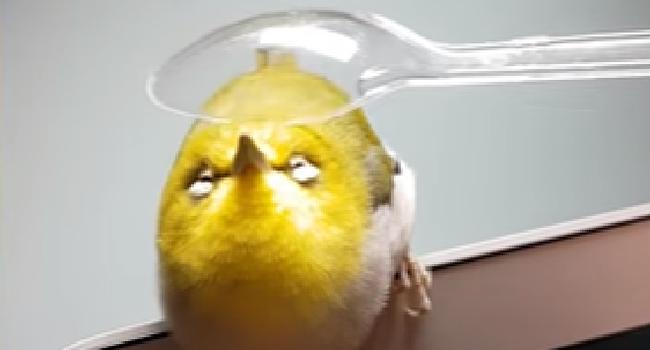 小鳥をちっちゃなスプーンでマッサージ どこを撫でられても気持ちよくてうっとりする姿が可愛い(動画あり) News Clicker-ニュースクリッカー