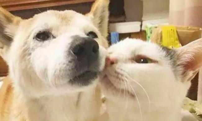 アルツハイマーの老犬のサポートをする優しき猫 いつも隣で支える素敵な光景にほっこり(動画あり) News Clicker-ニュースクリッカー