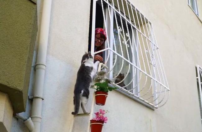 「寒い冬の避難所にうちを使って!」心優しい女性が野良猫たちのために部屋に梯子をかけ招き入れる(画像あり) News Clicker-ニュースクリッカー
