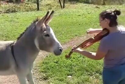 バイオリンとロバ