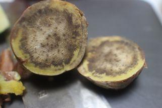 本場種子島産★長期熟成 訳あり安納芋