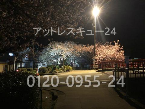 2020年・河津桜ライトアップ