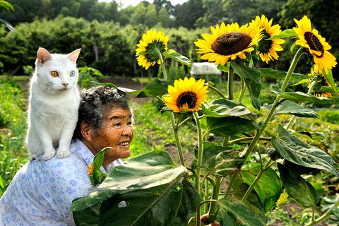 grandma-cat17