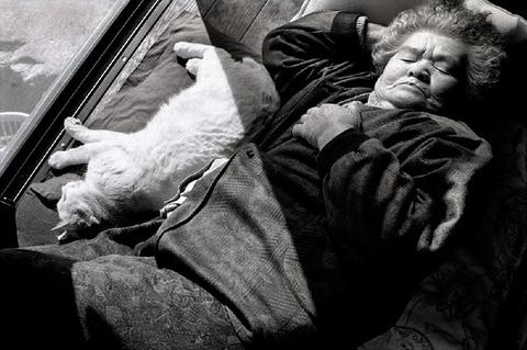 grandma-cat26