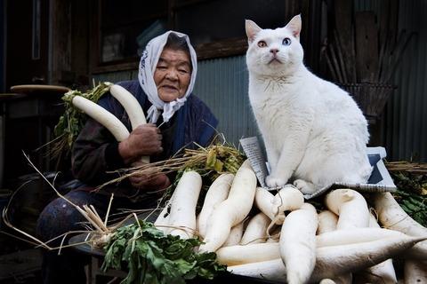 grandma-cat11