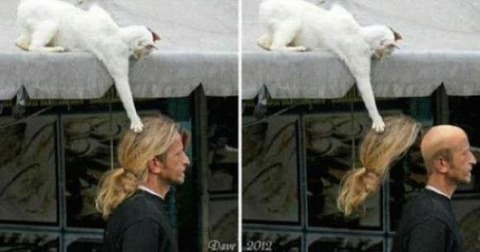 these-cats-think-theyre-sneaky-32-photos-25